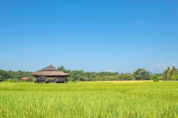 Maison de campagne sur les rizières de riz vert et est bientôt à la récolte des semences. Photo Premium