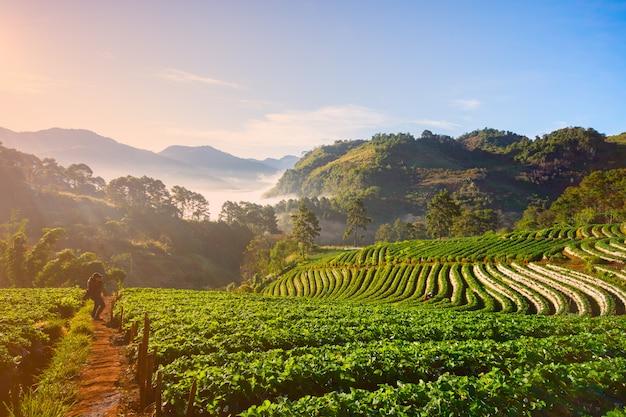 Maison rose en bambou pha mon les rizières en terrasses la communauté karen fondée sur l'écotourisme Photo Premium