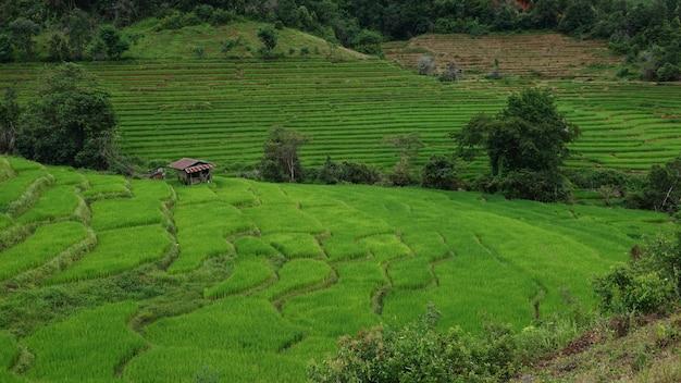 Maison En Terrasse De Riz à La Montagne Dans Le District De Mae Chaem, Province De Chiang Mai. Photo Premium