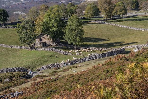 Maison de village en pierre avec moutons Photo Premium