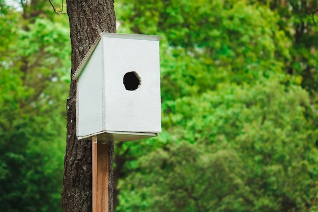 Mangeoire à Oiseaux Blanc Dans Une Forêt Verte Photo Premium