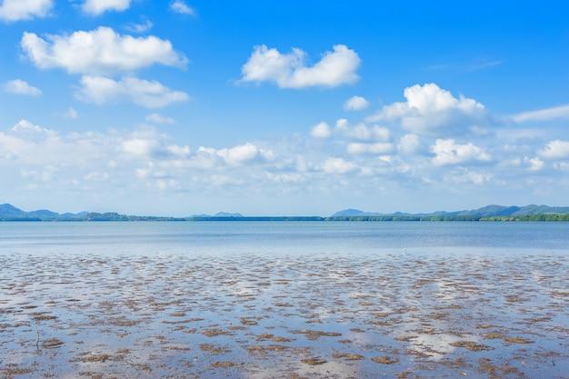 La mangrove forestière et la mer l'horizon Photo Premium