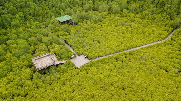 Mangroves intung prong thong ou champ de mangroves dorées à l'estuaire de pra sae, rayong, thaïlande Photo Premium