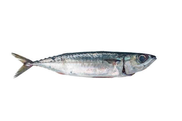 Maquereur de poisson frais Photo gratuit