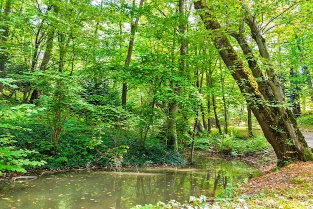 Marais Vert Luxuriant Et Forêt Tropicale Photo Premium