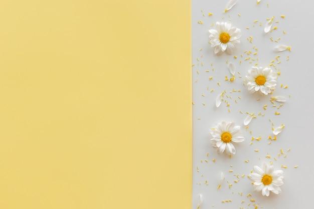Une Marguerite; Pollen Et Pétale Sur Fond Double Avec Fond Photo gratuit