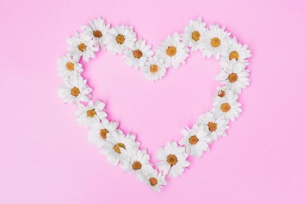 Marguerites blanches en arrangement sur fond rose Photo gratuit