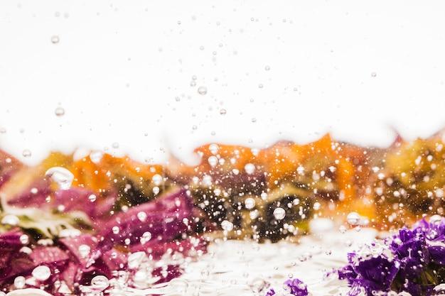 Marguerites colorées humides sur fond blanc Photo gratuit