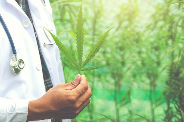 Marijuana Médicale, Concept Alternatif De Phytothérapie Photo gratuit