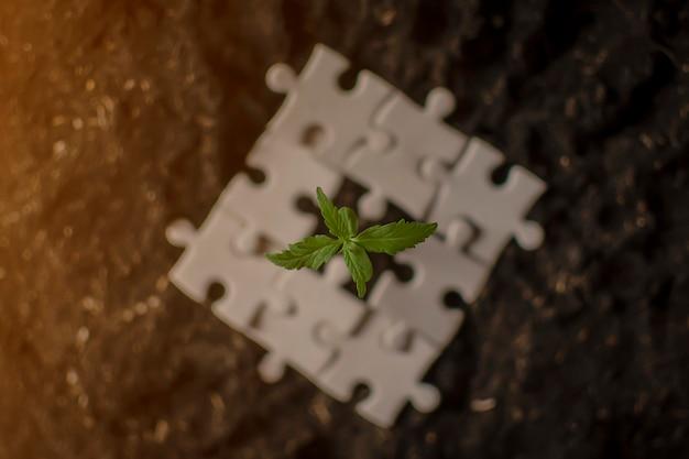 La marijuana poussant dans des tas d'argent. concept d'entreprise de marijuana. Photo Premium