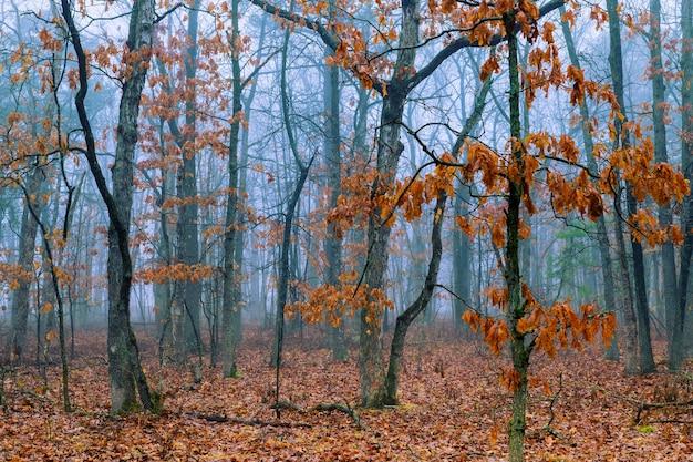 Matin en automne arbres forestiers et feuilles de paysage fantastique Photo Premium