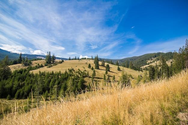 Matin D'été Brumeux Dans Les Montagnes. Carpates, Ukraine, Europe. Monde De La Beauté. Photo gratuit