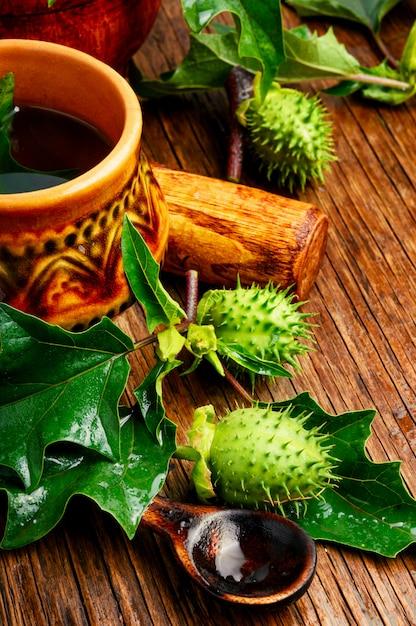 Médecine d'herbes naturelles, datura Photo Premium