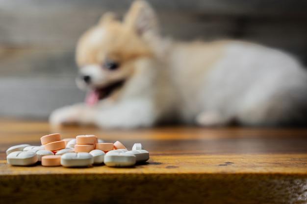Médecine vétérinaire Photo Premium