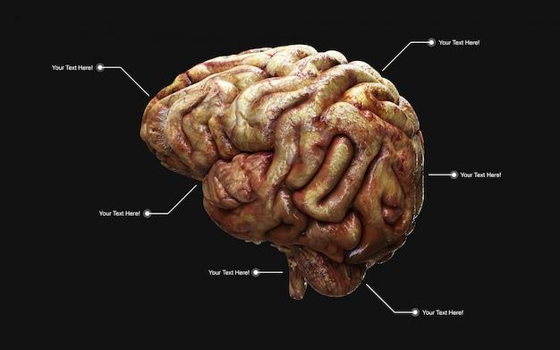 Médicalement, illustration 3d, cerveau humain, vue côté, isolé Photo Premium