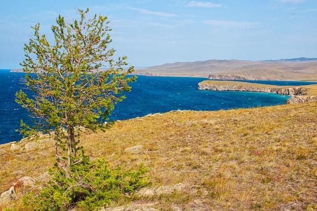 Mélèze et lac baïkal en été, île d'olkhon. Photo Premium