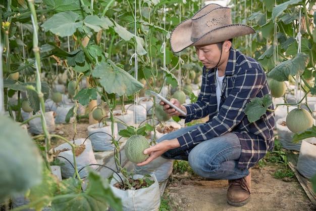 Des melons dans le jardin, un homme yong tenant un melon dans une ferme à melons en serre. Photo gratuit