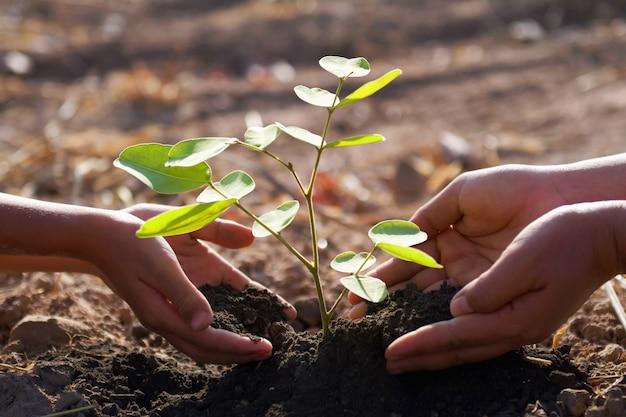 Mère et enfants aidant à planter un jeune arbre. monde vert concept Photo Premium
