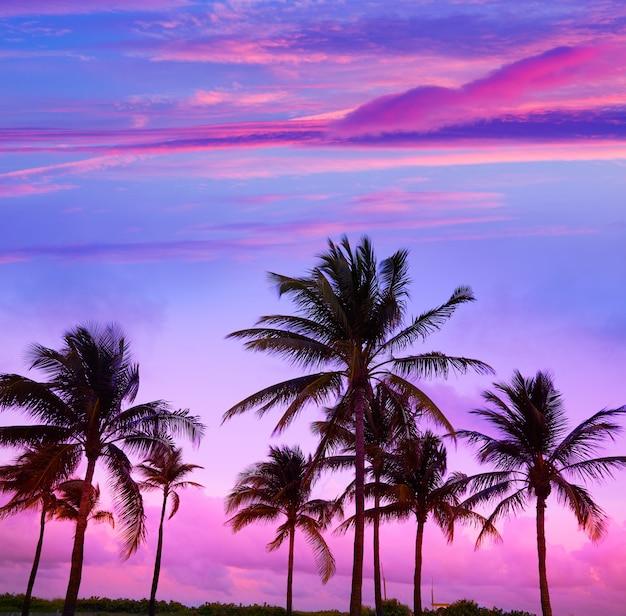 Miami beach south beach coucher de soleil palmiers en floride Photo Premium