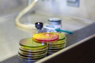 Microbiologie plaque Photo gratuit