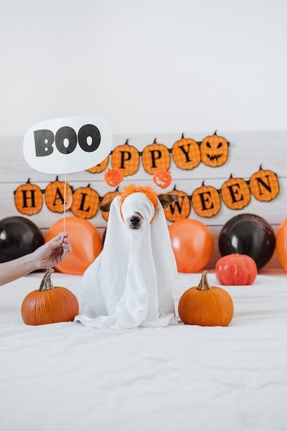 Mignon Chien Jack Russell à La Maison Avec Costume De Fantôme. Décoration D'halloween. Main De Femme Tenant Signe Boo Photo Premium
