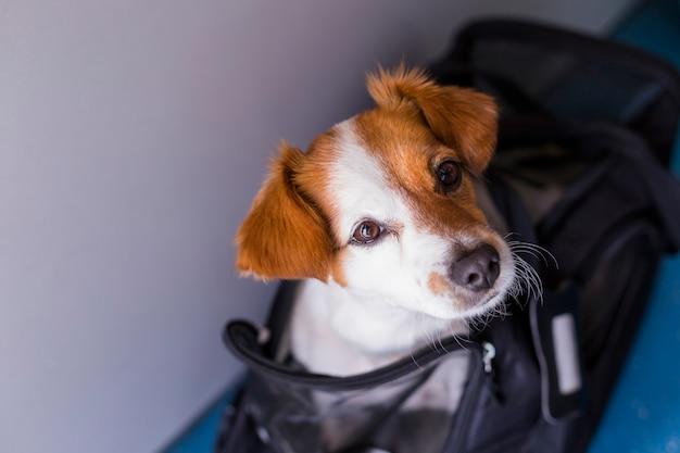 Mignon Petit Chien Dans Sa Cage De Voyage Prêt à Monter à Bord De L'avion à L'aéroport. Animal En Cabine. Voyager Avec Des Chiens Photo Premium