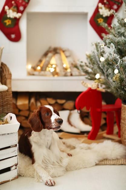 Mignon Petit Chien Sur Un Salon Décoré De Noël Photo gratuit