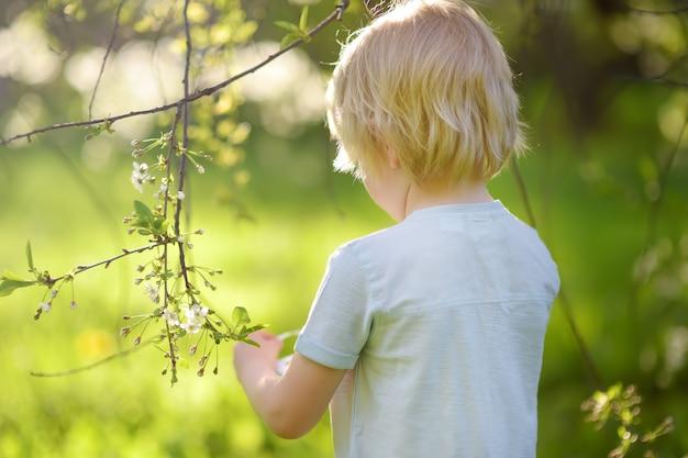 Un mignon petit garçon cherche l'oeuf de pâques sur l'arbre en fleurs de la branche. Photo Premium