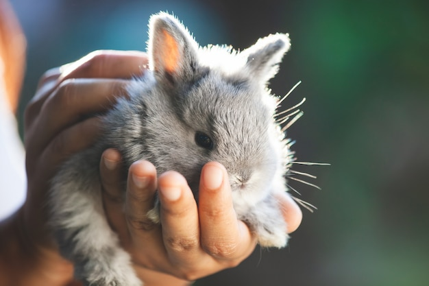 Mignon petit lapin dans les mains Photo Premium