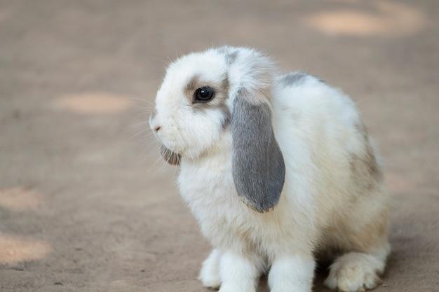 Mignon petit lapin Photo Premium