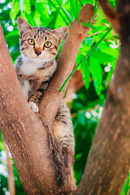 Mignon tabby chaton se détendre au sommet de l'arbre. Photo Premium