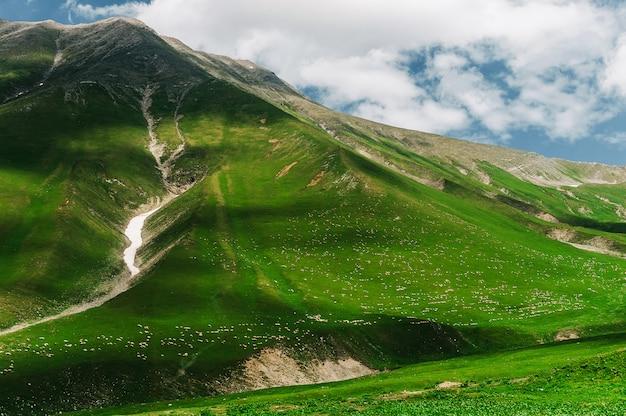 Un Million De Moutons Marchent Dans Les Vertes Montagnes Du Caucase, En Géorgie. Vue Imprenable Avec Des Animaux Dans La Nature Sauvage. Fente De Montagne Avec De La Neige. Photo Premium
