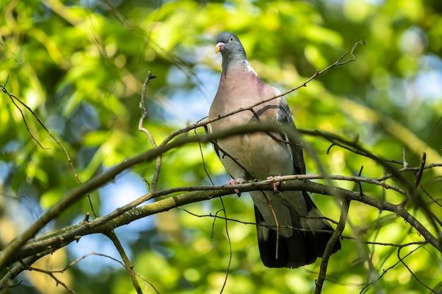 Mise Au Point Sélective à Faible Angle Tourné D'un Pigeon Assis Sur La Branche Avec De La Verdure Sur L'arrière-plan Photo gratuit