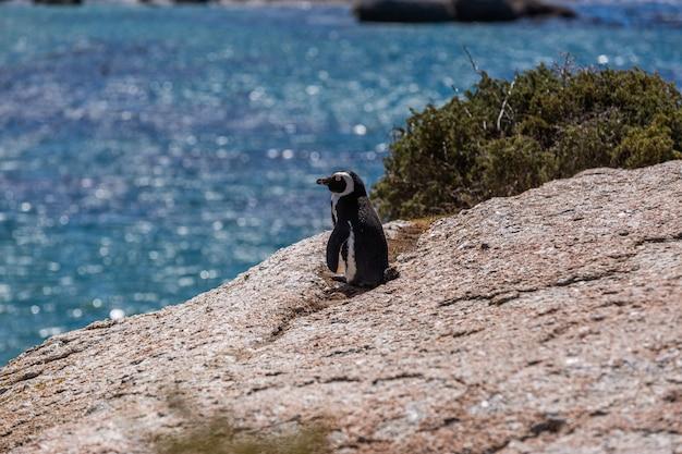 Mise Au Point Sélective D'un Mignon Pingouin Debout Sur La Plage De Cape Of Good Hope, Cape Town Photo gratuit