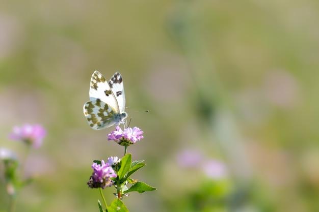 Mise Au Point Sélective D'un Papillon Sur Une Fleur Photo gratuit