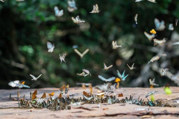 Mise au point sélective papillons au sol et volant dans la nature Photo Premium