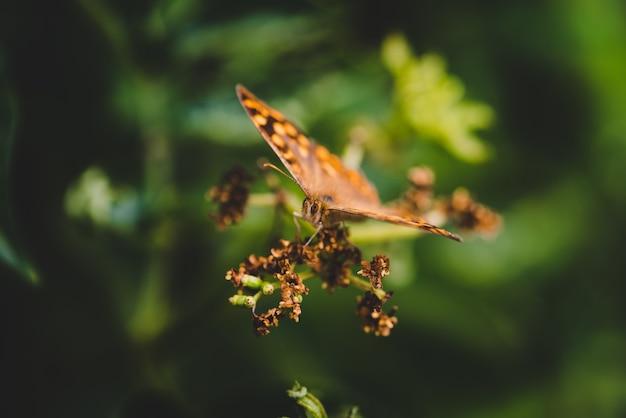 Mise Au Point Sélective D'un Pararge Sur Une Plante Dans Un Champ Sous La Lumière Du Soleil Avec Un Arrière-plan Flou Photo gratuit
