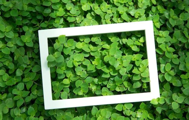 Mise en page créative faite de fleurs et de feuilles avec cadre blanc. vue de dessus. concept nature Photo Premium