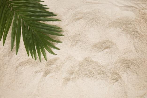 Mise en page de poussiéreux feuille de palmier sur le sable Photo gratuit
