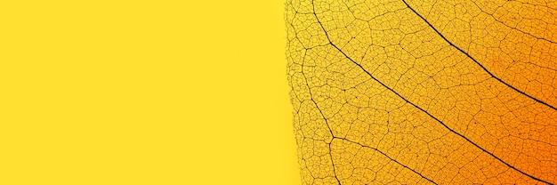 Mise à Plat De Feuilles Colorées Avec Texture Transparente Photo gratuit