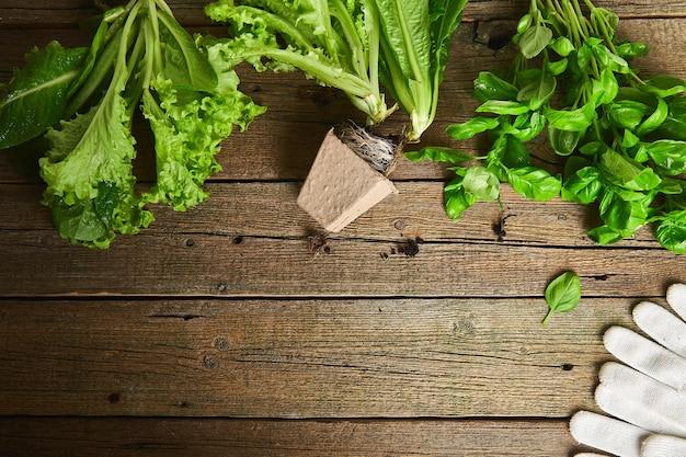 Mise à Plat D'outils De Jardinage, Basilic, Pot De Fleurs éco Verts, Sol Photo Premium