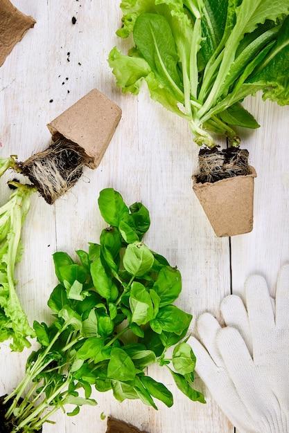 Mise à Plat D'outils De Jardinage, Basilic, Pot De Fleurs écologique, Sol Photo Premium
