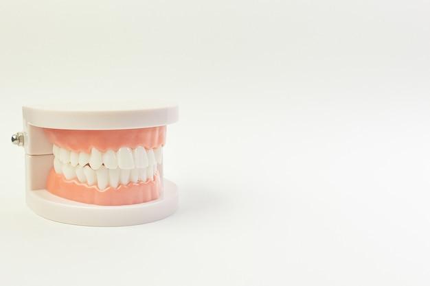 Le modèle tooth sur fond blanc pour le contenu dentaire. Photo Premium