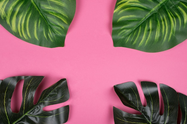 Monstera et calathea feuilles sur fond rose Photo Premium