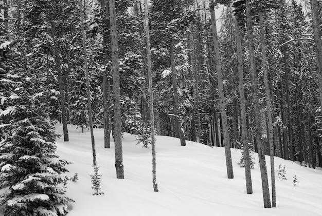 Montagne couverte de neige à vail, colorado Photo Premium