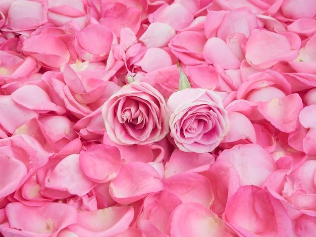 Monture En Pétales De Rose Rose Photo Premium