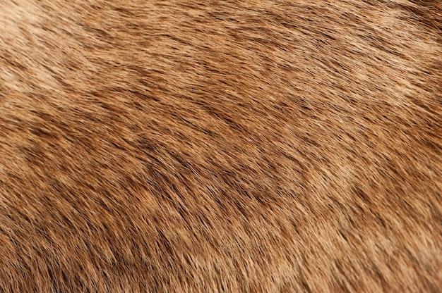 Moose Coat Photo gratuit
