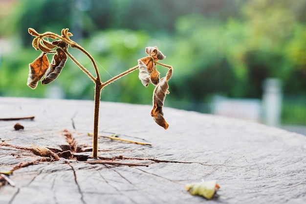 Morts d'un semis fort qui pousse dans le tronc central, se concentrer sur une nouvelle vie est mort, pas vivant. Photo Premium