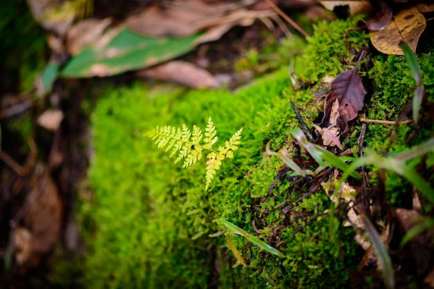 Mos dans la forêt tropicale Photo Premium