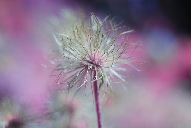 Motif floral abstrait avec fleur surréaliste sur fond coloré. Photo Premium